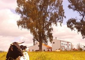 Finca Los Llanos- Casa Mayoral