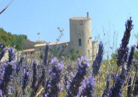 Château de la Gabelle- Gîte Roussillon